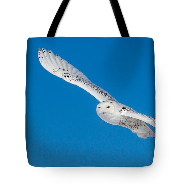 Tote Bag featuring the photograph Snowy Owl by Dan Traun