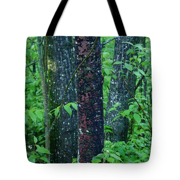 3 Trees Tote Bag by Joanne Smoley