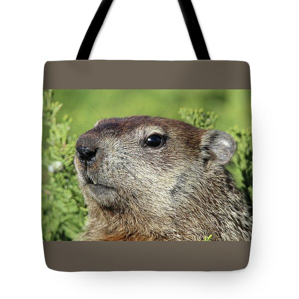 Woodchuck Calverton New York Tote Bag
