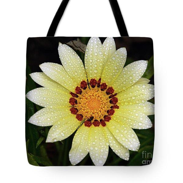 Nice Gazania Tote Bag by Elvira Ladocki