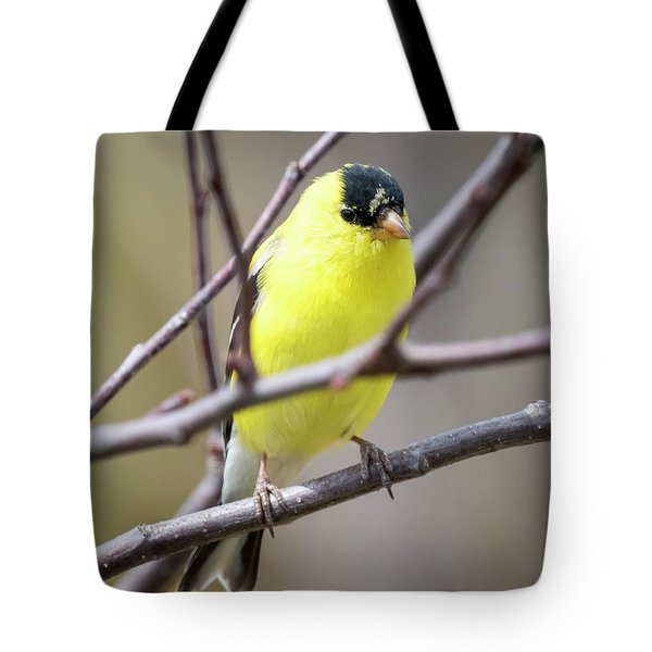 Tote Bag featuring the photograph American Goldfinch  by Ricky L Jones
