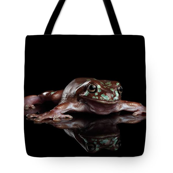 Australian Green Tree Frog, Or Litoria Caerulea Isolated Black Background Tote Bag