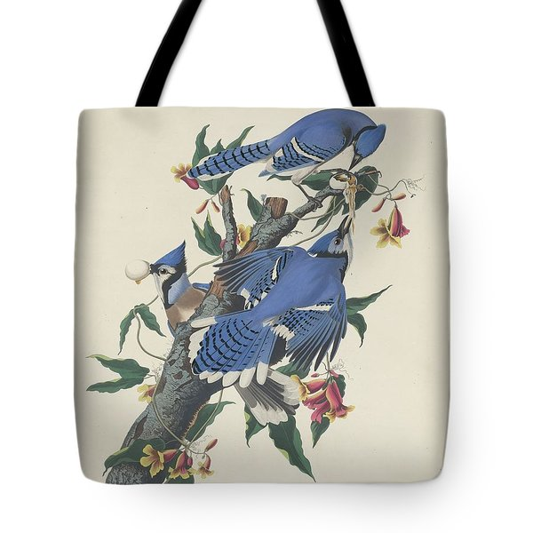 Blue Jay Tote Bag by Rob Dreyer