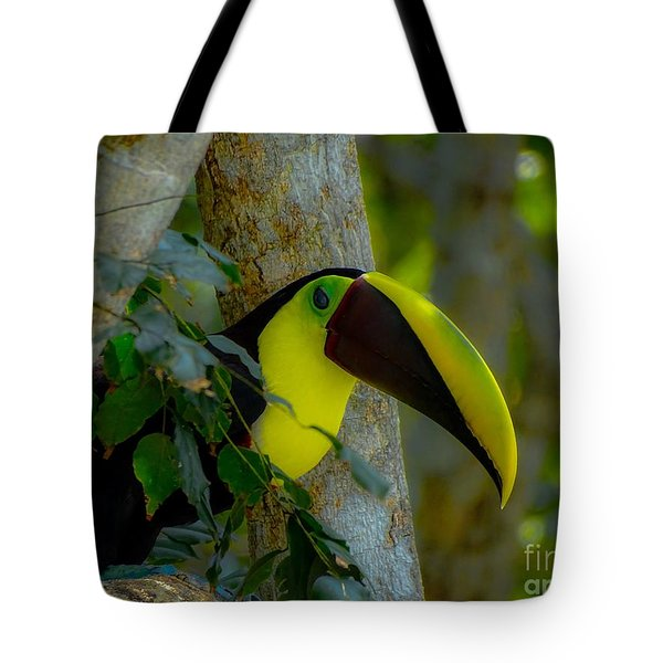 Chestnut-mandibled Toucan Tote Bag