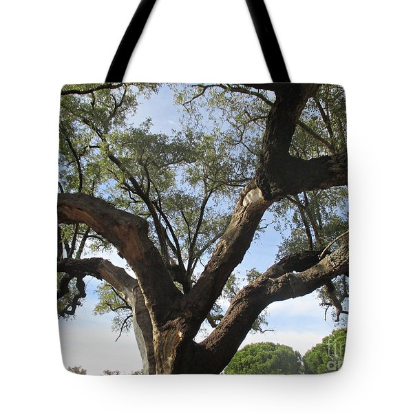 Cork Oak And Pines Tote Bag