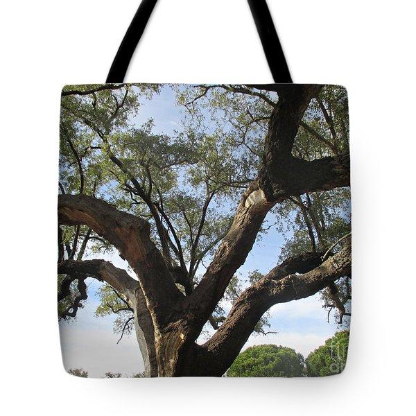 Cork Oak And Pines Tote Bag
