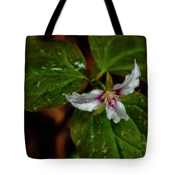 Tote Bag featuring the photograph Painted Trillium  by Thomas R Fletcher
