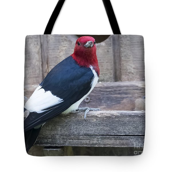 Red-headed Woodpecker Tote Bag