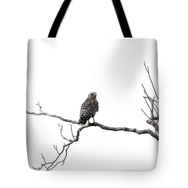 Red Shouldered Hawk Tote Bag by Anne Rodkin