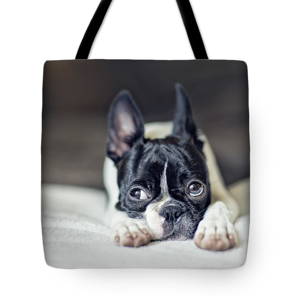 Boston Terrier Puppy Tote Bag by Nailia Schwarz