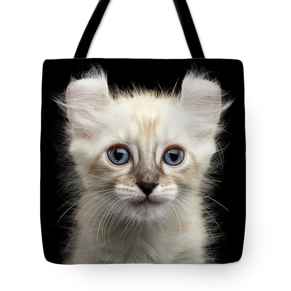 Cute American Curl Kitten With Twisted Ears Isolated Black Background Tote Bag