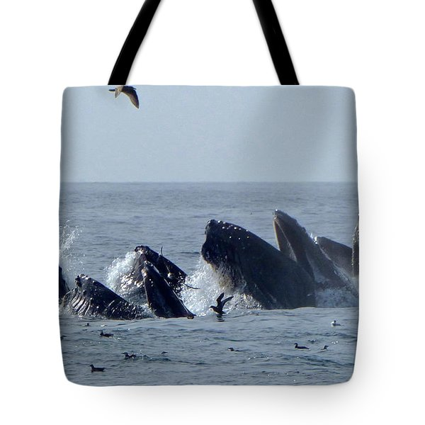 5 Humpbacks Lunge Feeding  Tote Bag