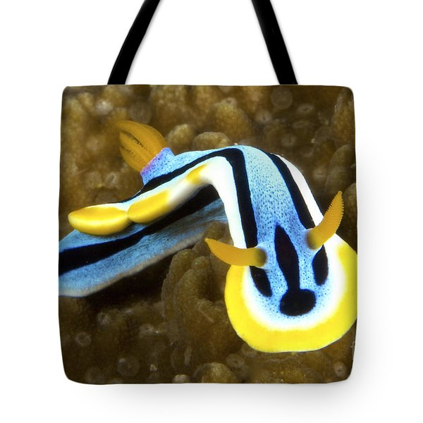 Nudibranch Feeding On Algae, Papua New Tote Bag by Terry Moore