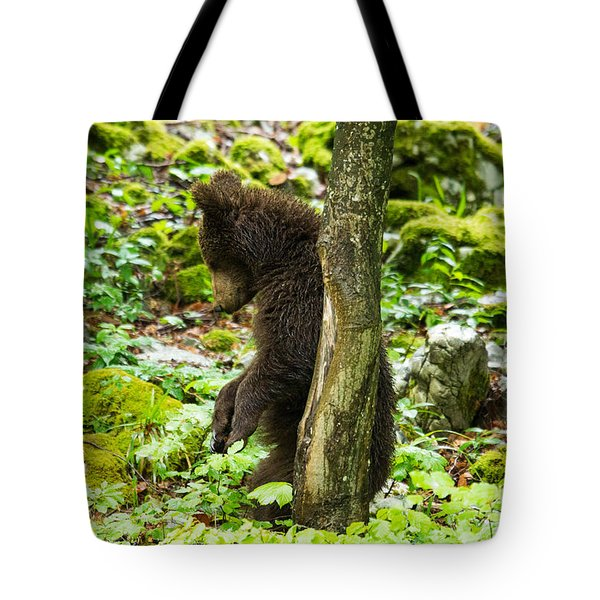 One Year Old Brown Bear In Slovenia Tote Bag