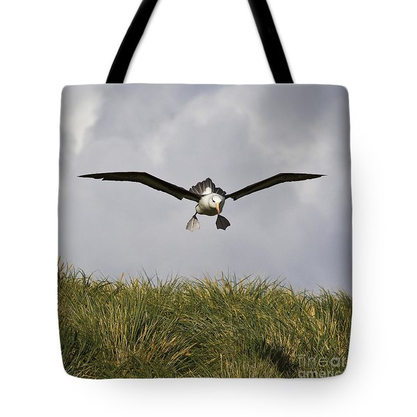Black-browed Albatross Tote Bag by Jean-Louis Klein & Marie-Luce Hubert
