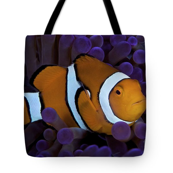 False Ocellaris Clownfish In Its Host Tote Bag by Terry Moore