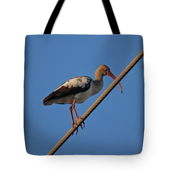 Tote Bag featuring the photograph 8- Brown Ibis by Joseph Keane