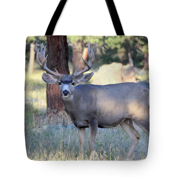 Tote Bag featuring the photograph 8x8 Mule Deer by Shane Bechler