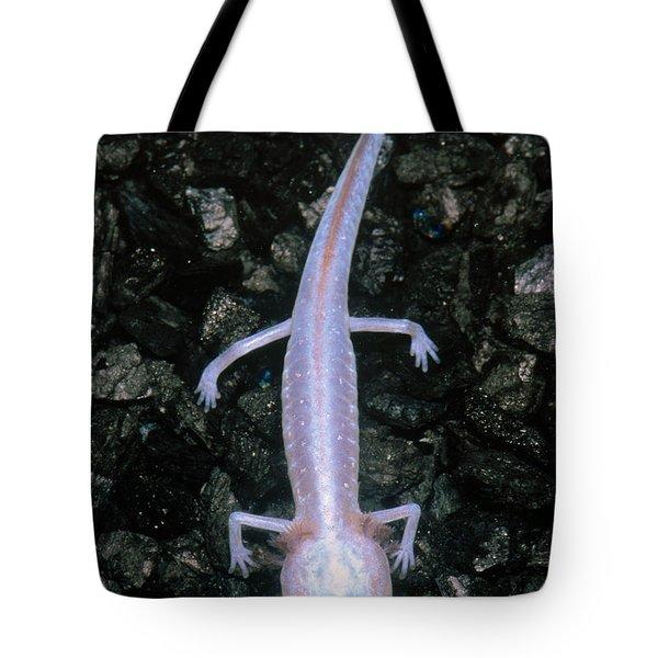 Austin Blind Salamander Tote Bag by Dante Fenolio