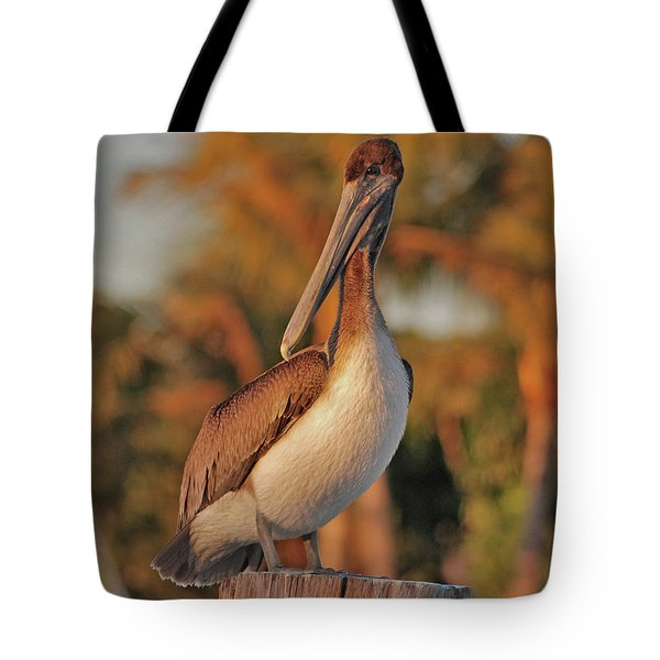Tote Bag featuring the photograph 9- Brown Pelican by Joseph Keane