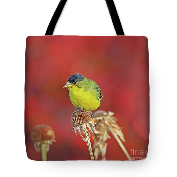 Lesser Goldfinch Tote Bag