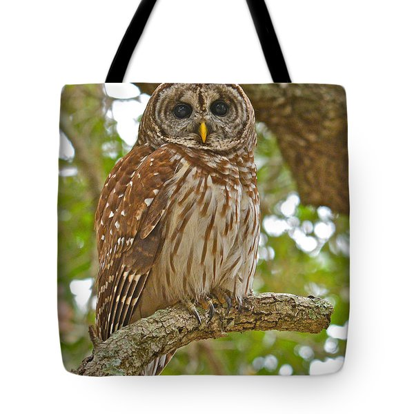 A Barred Owl Tote Bag
