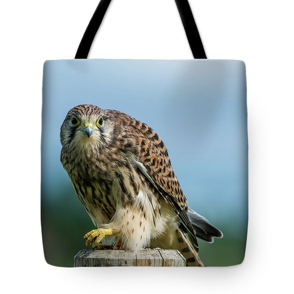 A Beautiful Young Kestrel Looking Behind You Tote Bag