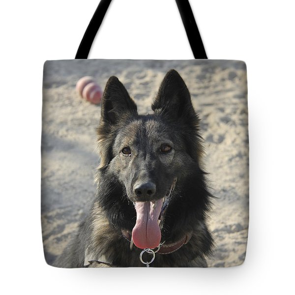 A Belgian Tervuren Military Working Dog Tote Bag by Stocktrek Images