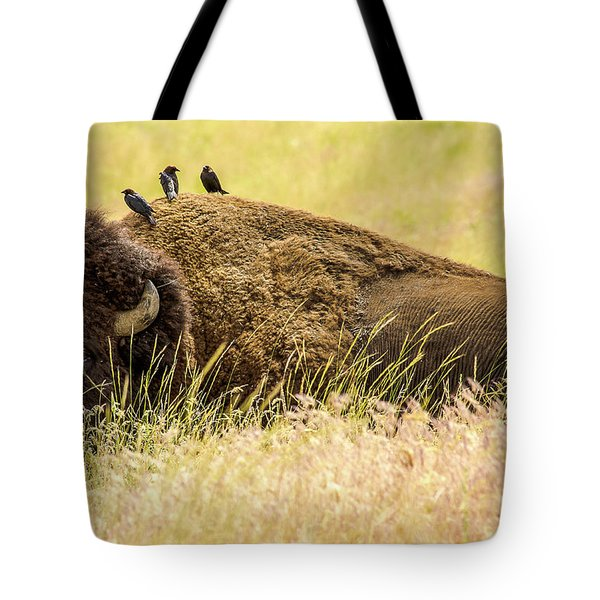 A Bison And The Freeloaders Tote Bag