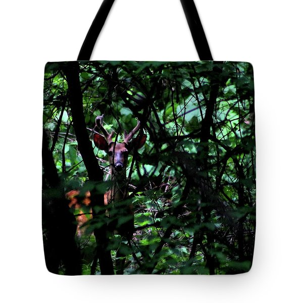 A Buck Peers From The Woods Tote Bag by Bruce Patrick Smith
