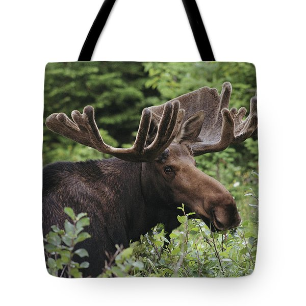 A Bull Moose Among Tall Bushes Tote Bag