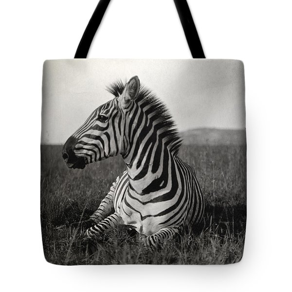 A Burchells Zebra At Rest Tote Bag