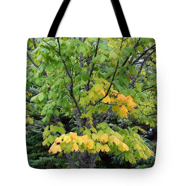 Tote Bag featuring the photograph A Burst Of Yellow Orange by Ellen Barron O'Reilly