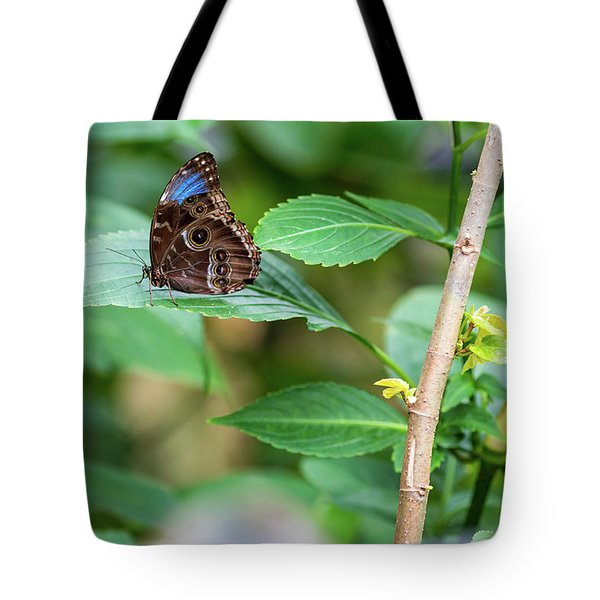 Tote Bag featuring the photograph A Butterfly Waiting by Raphael Lopez