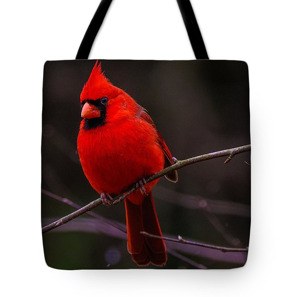 A Cardinal In January  Tote Bag by John Harding