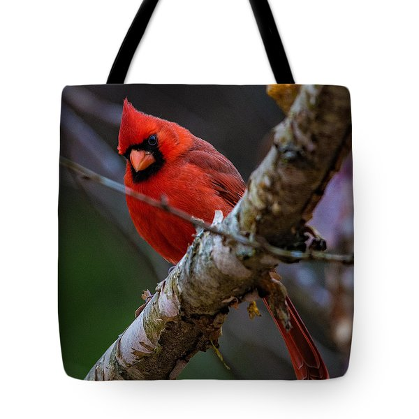 A Cardinal In Spring   Tote Bag