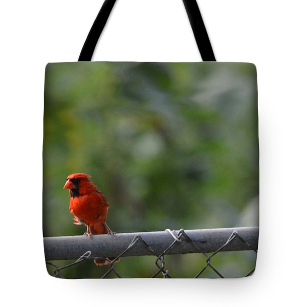 Tote Bag featuring the photograph A Cardinal On A Fence by Carolina Liechtenstein