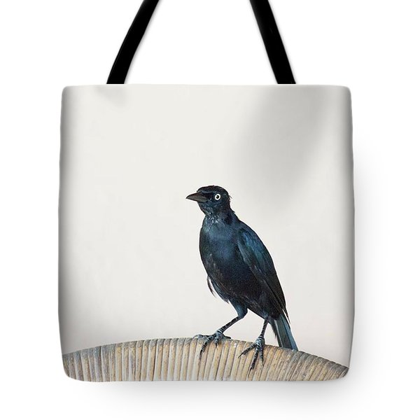A Carib Grackle (quiscalus Lugubris) On Tote Bag by John Edwards