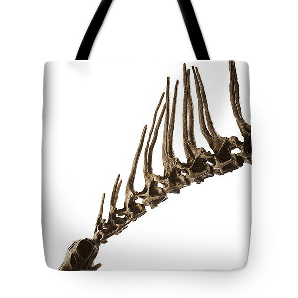 A Cast Of An Amargasaurus Showing Tote Bag