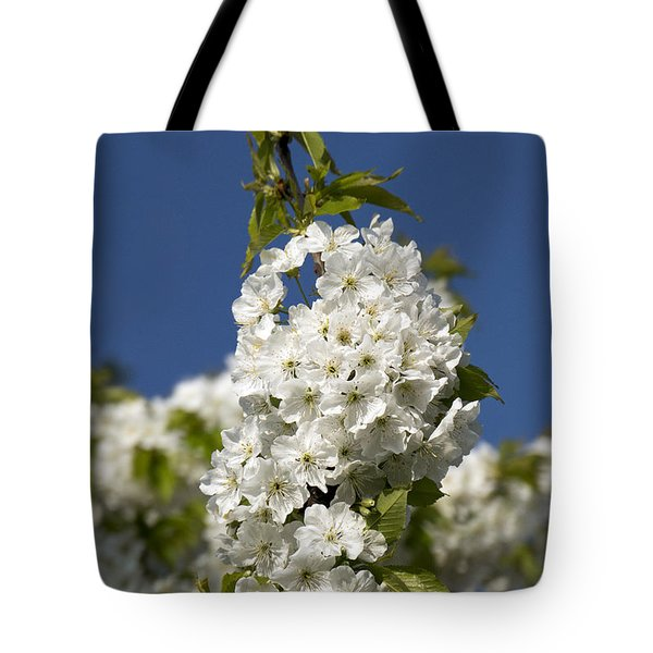 A Cluster Of Cherry Flowers Blossoming In The Springtime Tote Bag