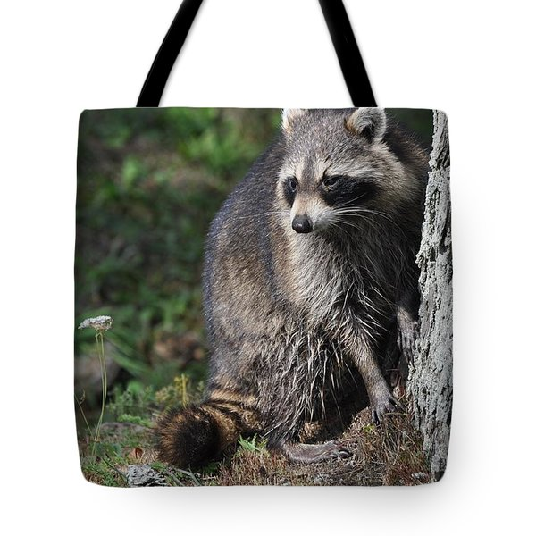 A Curious Raccoon Tote Bag