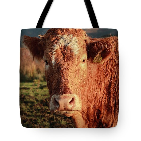A Curious Red Cow Tote Bag