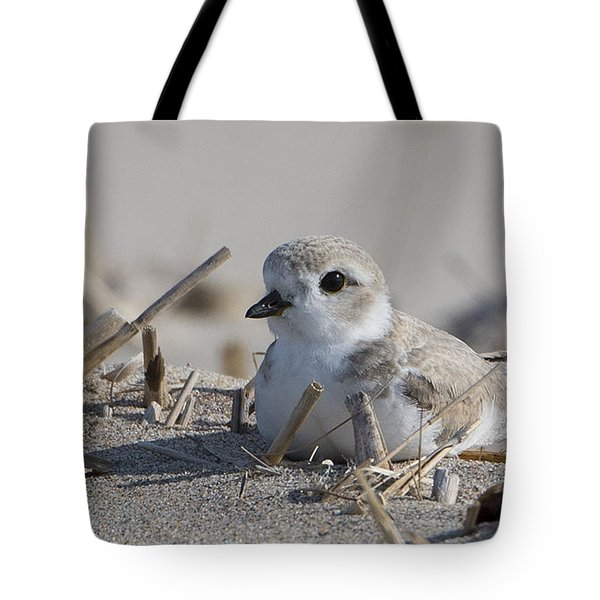 Tote Bag featuring the photograph Petite Plover by Stephen Flint