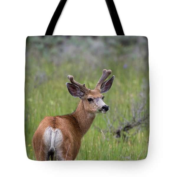 A Deer In Yellowstone National Park  Tote Bag