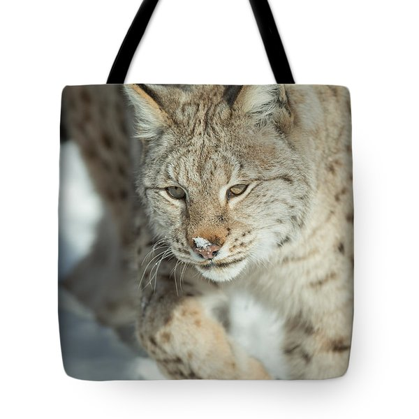 A Eurasian Lynx In Snow Tote Bag