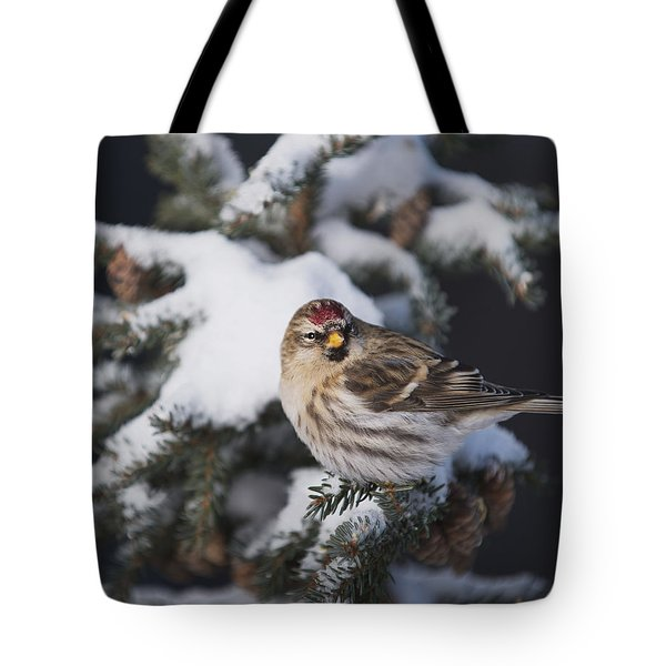 A Female Common Redpoll  Carduelis Tote Bag