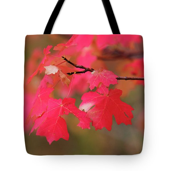 A Flash Of Autumn Tote Bag