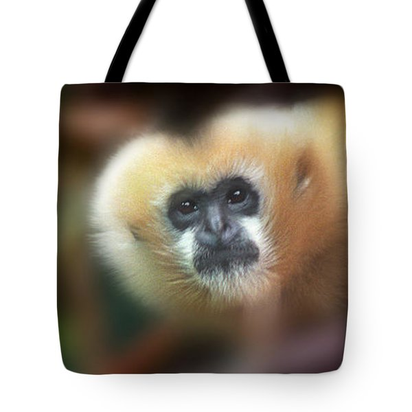 A Gibbon's Stare Tote Bag by Greg Slocum
