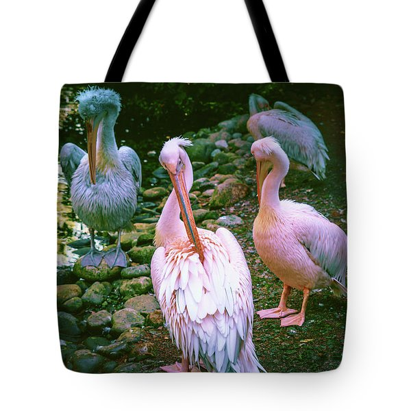 a group of swans near the pond on a Sunny summer day Tote Bag
