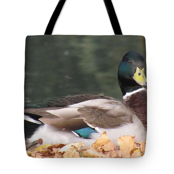 A Handsome Mallard Tote Bag